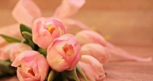 tulips-2068688_1920