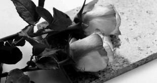 розы траур